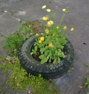 autoband wordt bloembak